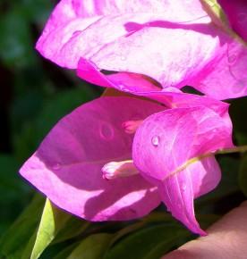 Gardening-Bogan Bellia